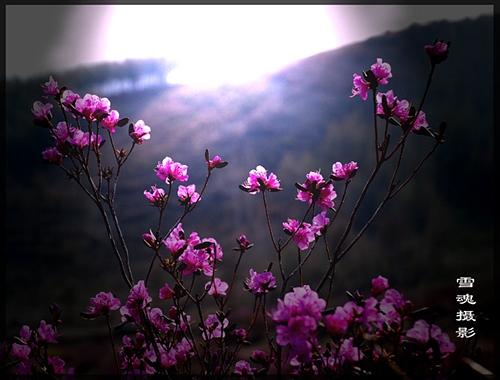 【诗歌】:梦·空间里的阻隔 - 雪魂 - 东山雪 博客